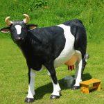 Sztuczna krowa do dojenia - wynajem